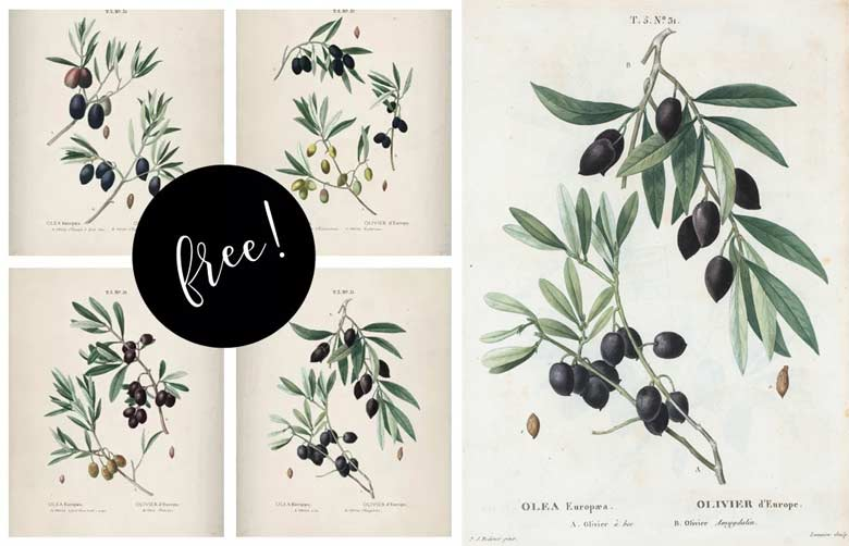 olive branches free farmhouse printables collection