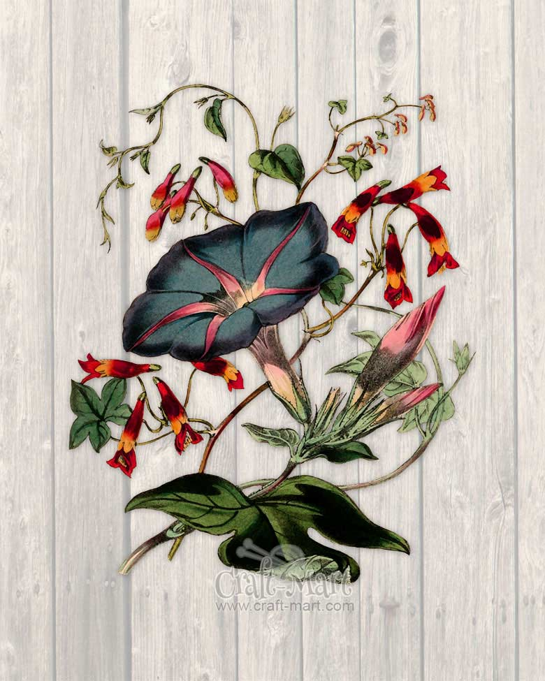 free spring flower print