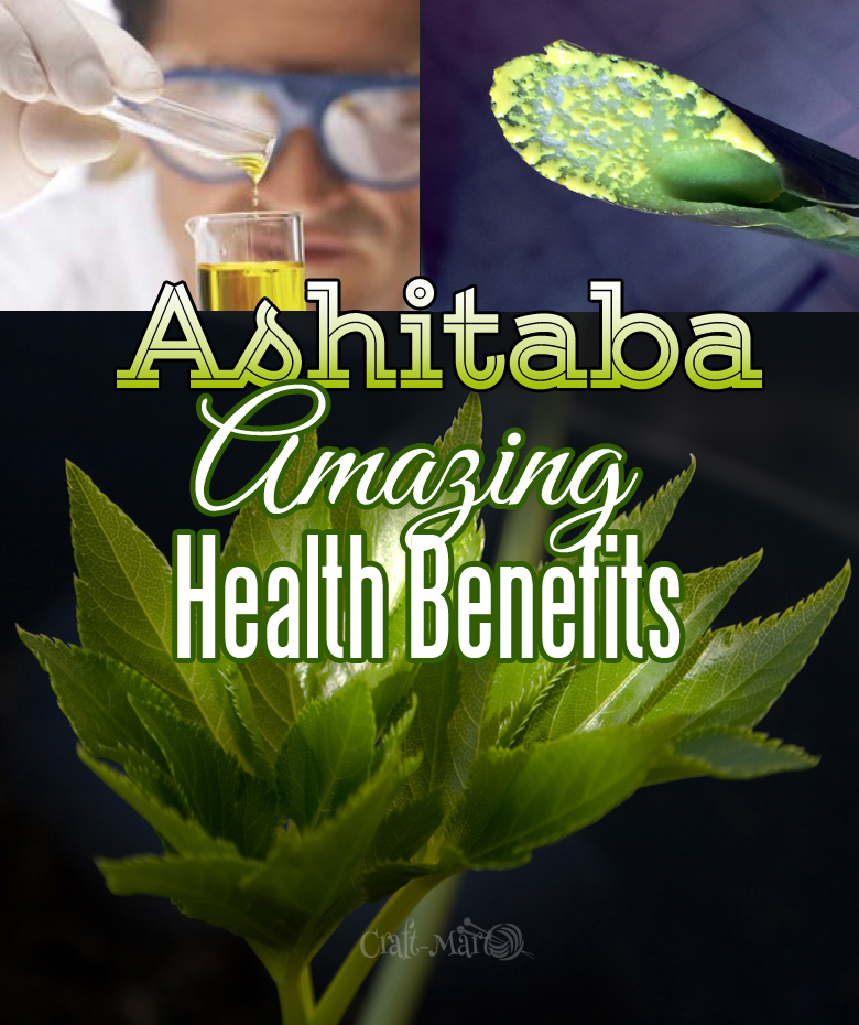 Ashitaba health benefits