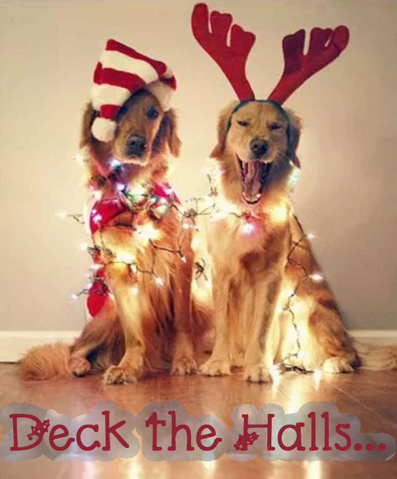 17 MOST CREATIVE AND FUNNY CHRISTMAS PHOTOS (PLUS SAYINGS AND QUOTES) #funnyChristmasphotos; funny Christmas cards; unique Christmas cards