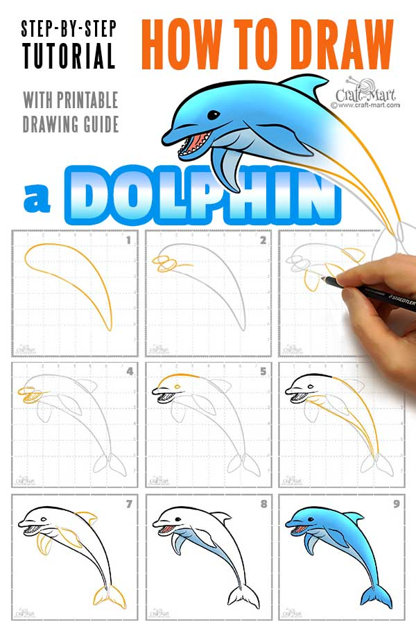 drawing a dolphin in 9 easy steps