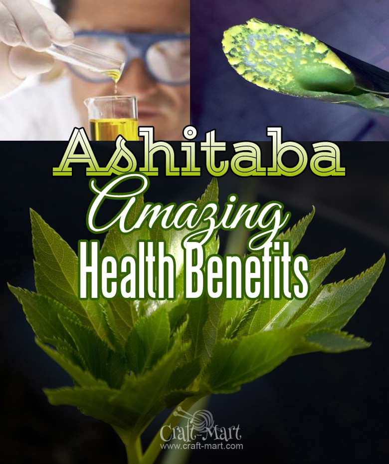 Read about amazing benefits of Ashitaba plant and tea - the ancient herbal miracle plant from Japan. Slow down aging, loose weight and get rid of kidney stones with this incredible remedy. Why do you think Asian people look so young and live longer? Just read !...