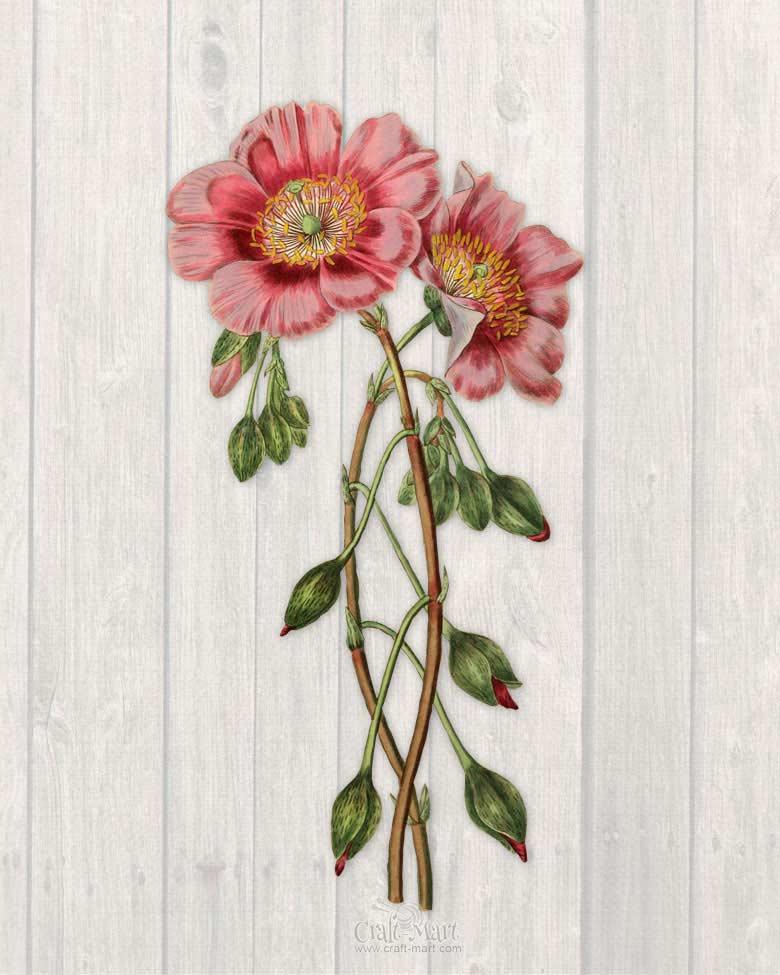 spring flower print