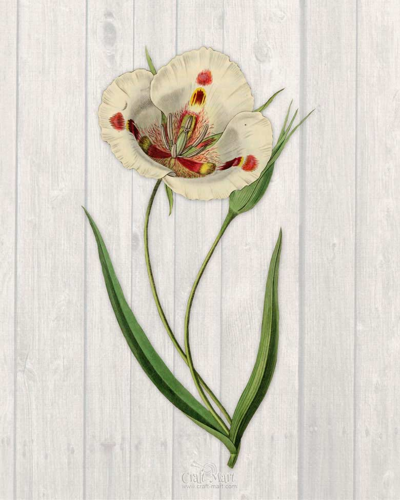 free printable of a spring flower