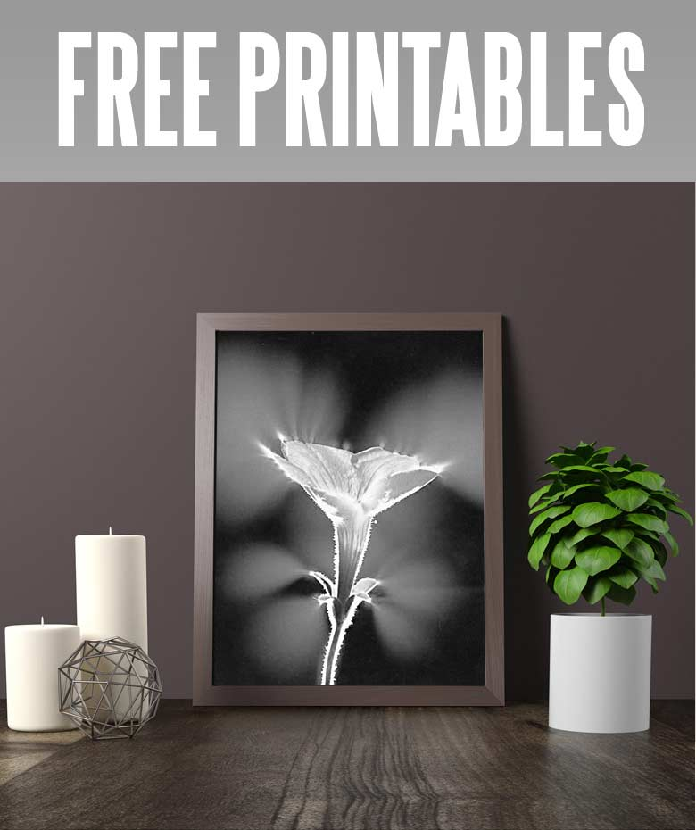 photo about Printable X Rays titled Absolutely free printable floral wall artwork towards embellish your area