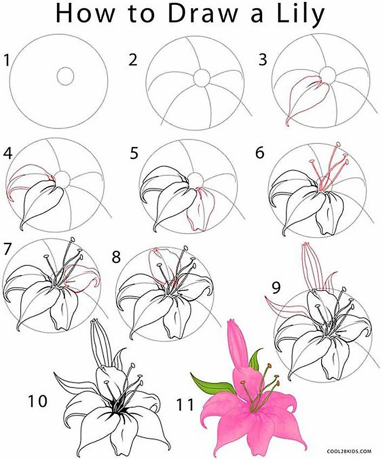 Step by step drawing of a lily- Learn how to draw flowers like roses of lilies and turn them into really beautiful wall art. practice flower drawings easy on chalkboard with step-by-step tutorials and easy to follow the instructions and get amazing results!  #drawings #howtodraw #flowers
