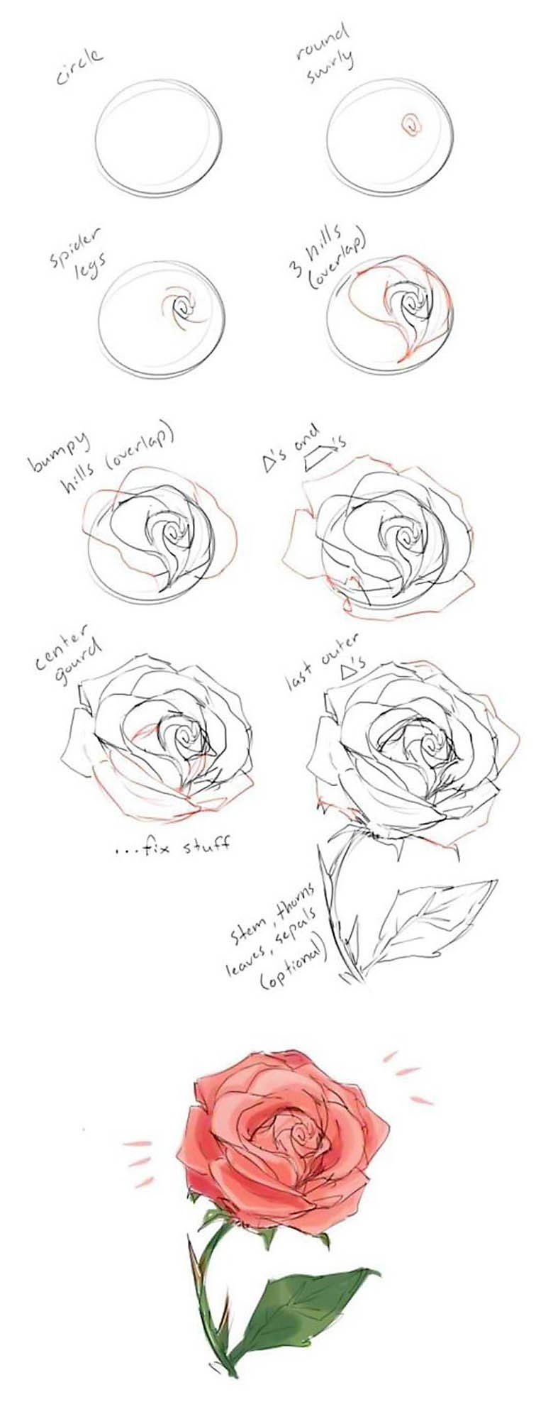 How to draw a rose step by step drawing guide learn how to draw flowers
