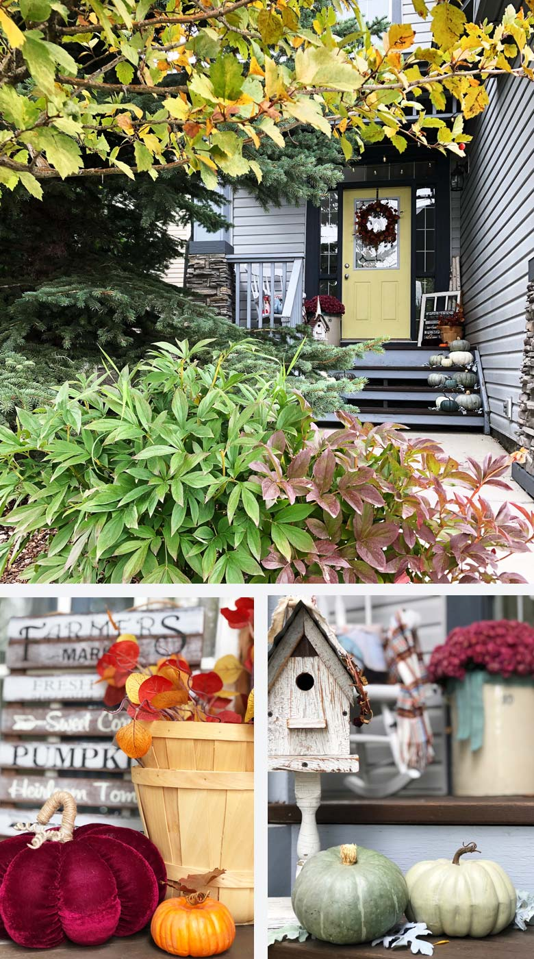 small front porch decorating ideas - a welcoming suburban fron porch with a gorgeous display of white and grey pumpkins from a local farm and an array of twinkling fairy lights and sprigs of Dusty Miller #frontporchideas #outdoorfalldecoratingideas #smallfrontporchdecoratingideas