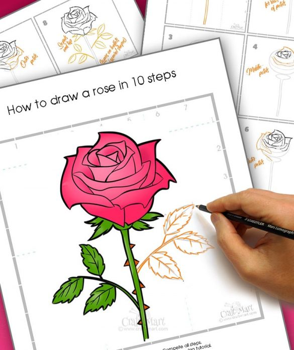 how to draw a rose flower tutorial
