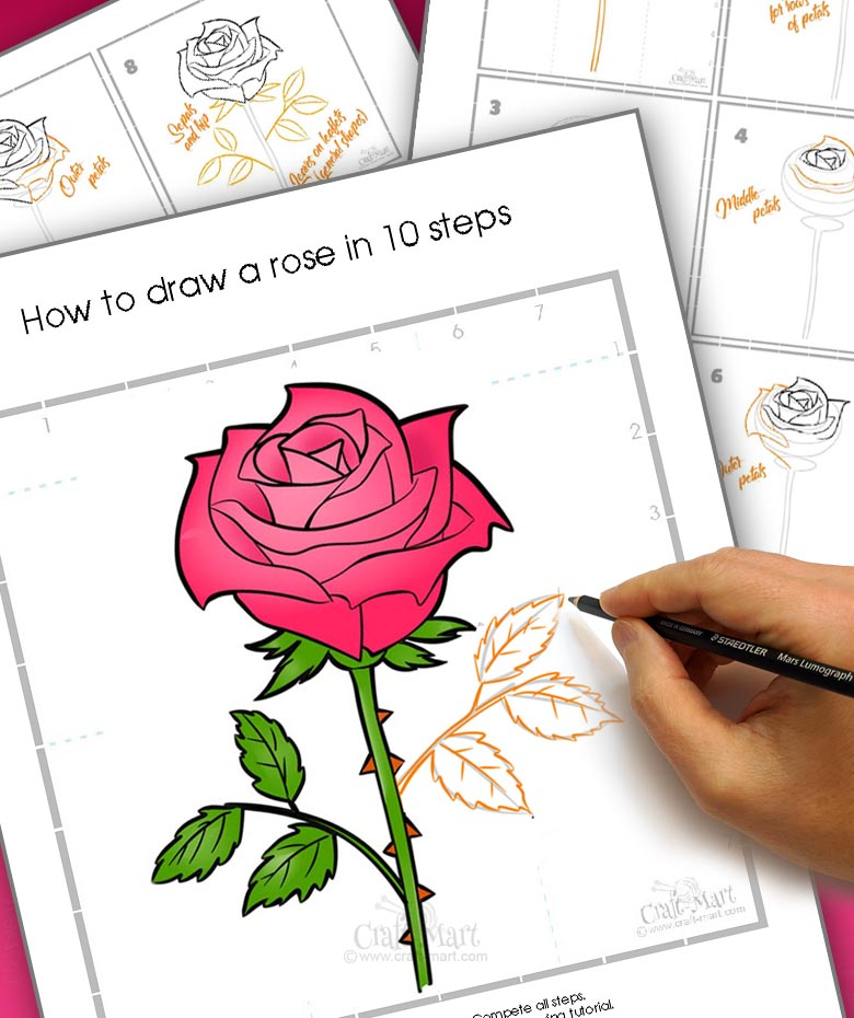 How To Draw A Rose Step By Step Guide For Beginners Craft Mart