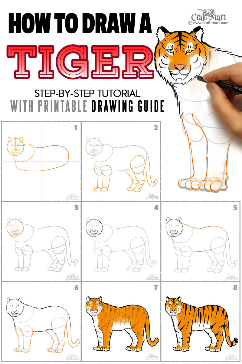 how to draw a tiger easily step by step chart