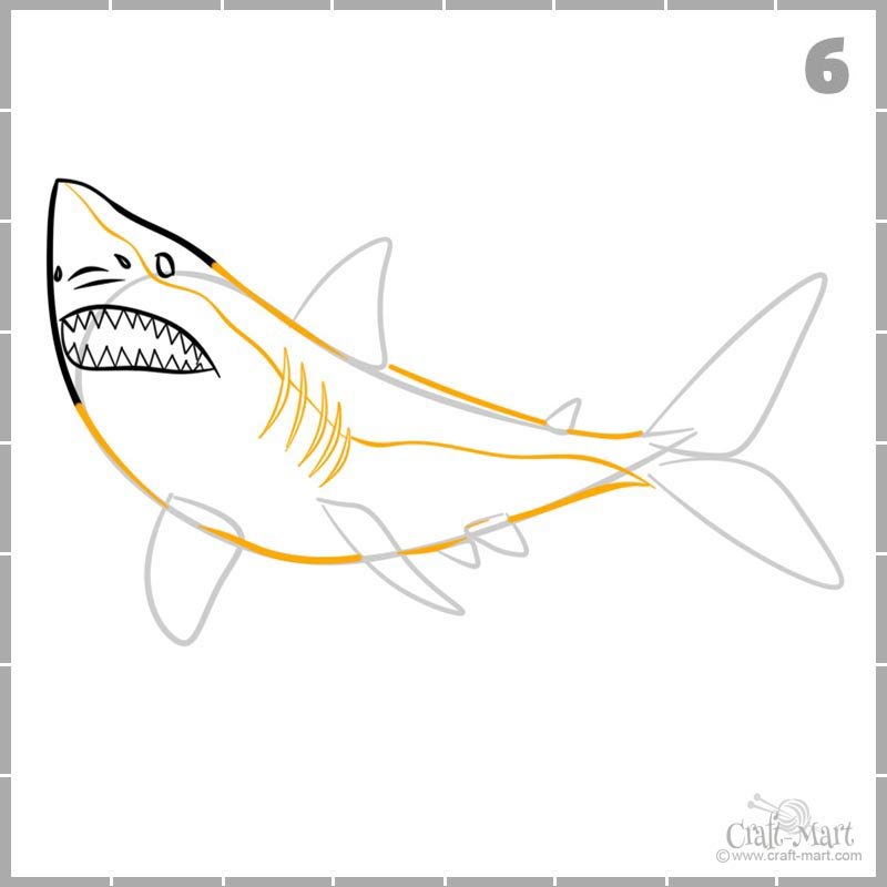 Learn how to draw shark's body and gills