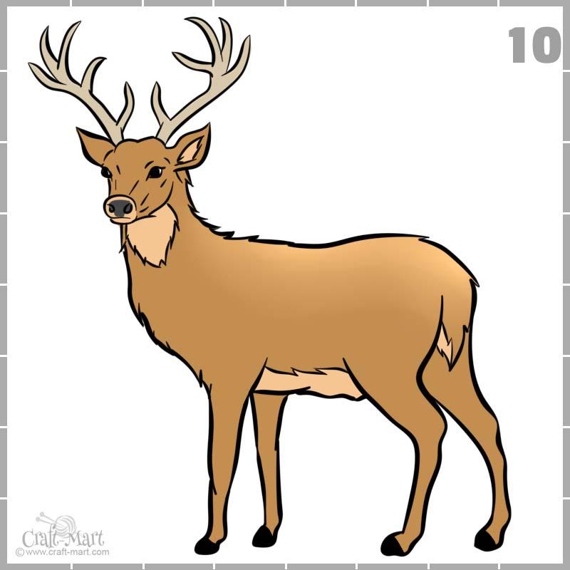 final drawing of a deer