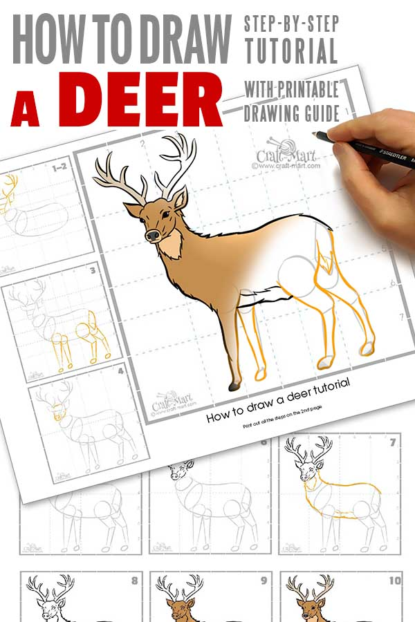 how to draw a deer step-by-step printable guide