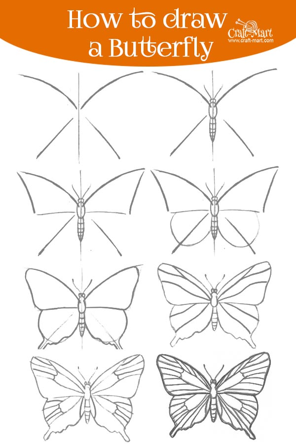 drawing a butterfly in 8 steps