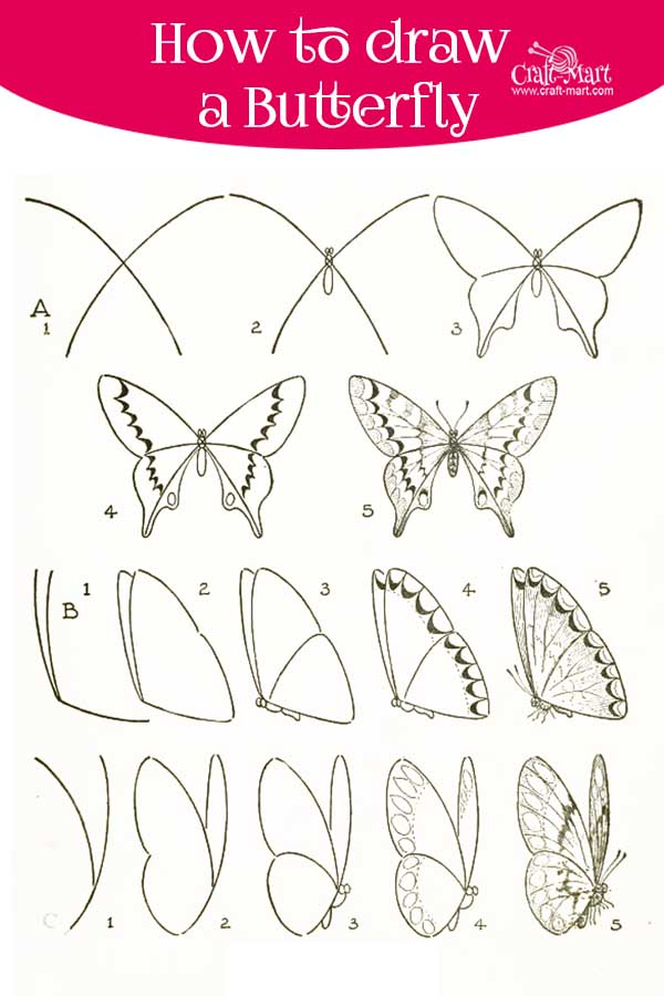 learn frontal and side butterfly drawing